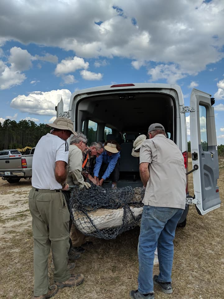 2019-03-26 2019-03-26 The adult gomphothere skull jacket moved into the van with people power. Florida Museum photo by Bill and Carol Sewell