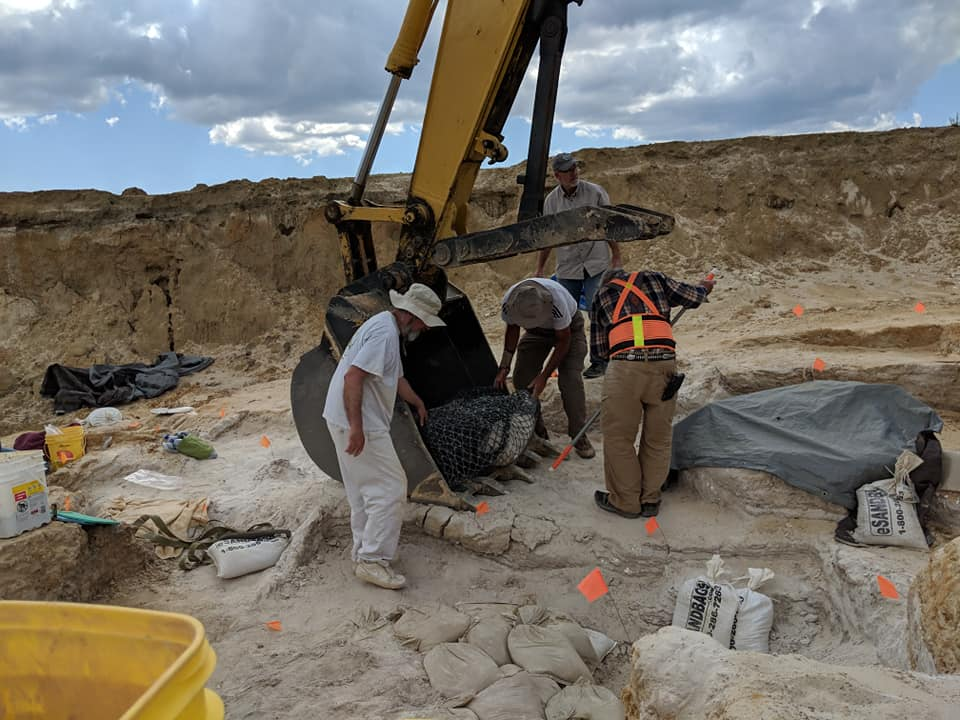 2019-03-26 2019-03-26 The adult gomphothere skull jacket moved into the excavator bucket with people power. Florida Museum photo by Bill and Carol Sewell