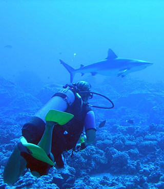 Grey reef shark and diver. Photo (c) Brian Donahue jpg