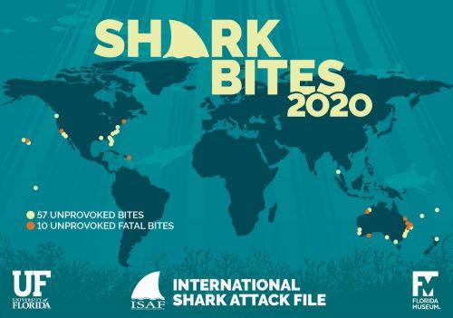 shark bite world