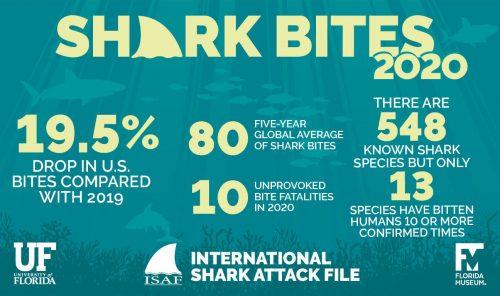 Shark bite summary