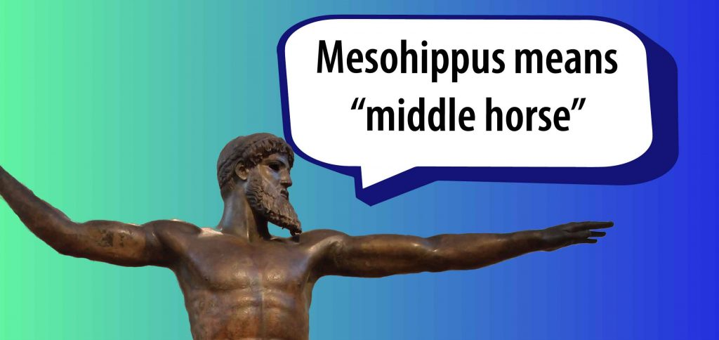 "Mesohippus means ""middle horse"""