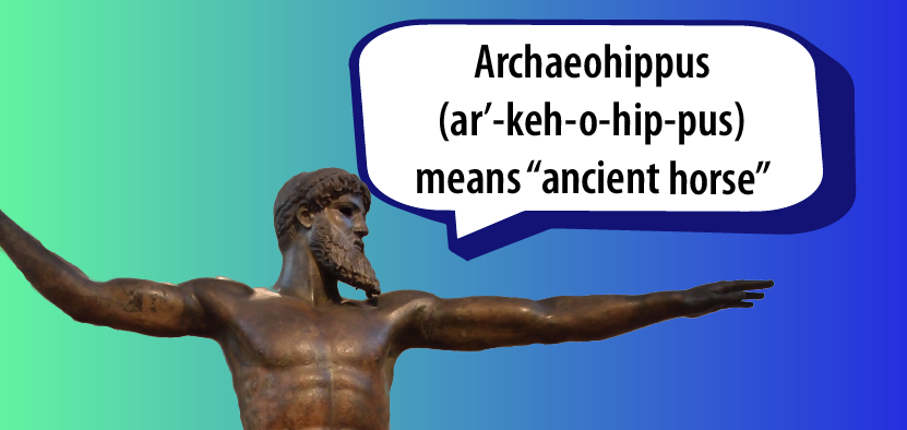 "Archaeohippus (ar'-keh-o-hip-pus) means ""ancient horse"""