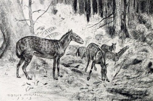 black and white drawing of Mesohippus horses