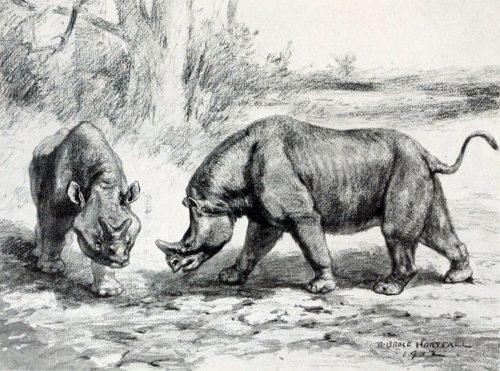 Brontops drawing