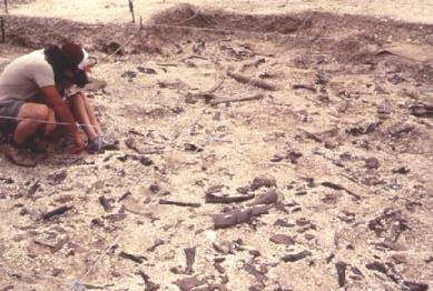 scientist at a fossil dig site