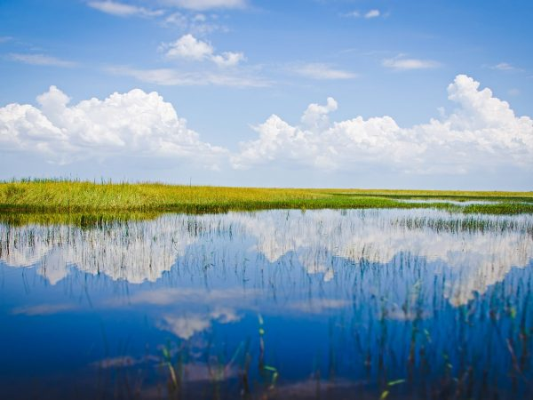 Everglades_Pixabay