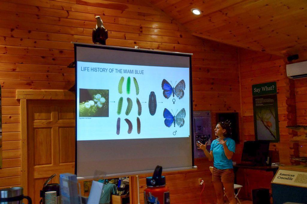 sarah cabrera miami blue butterfly presentation