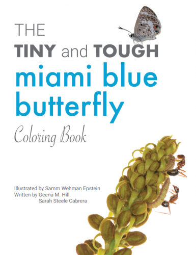 miami blue coloring book