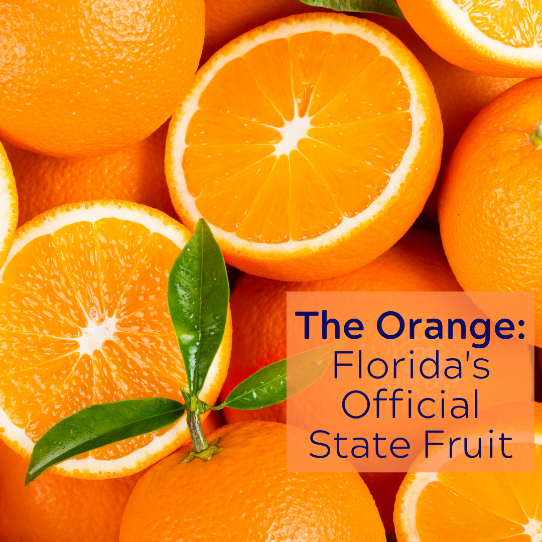 A graphic of oranges, Florida's official state fruit.
