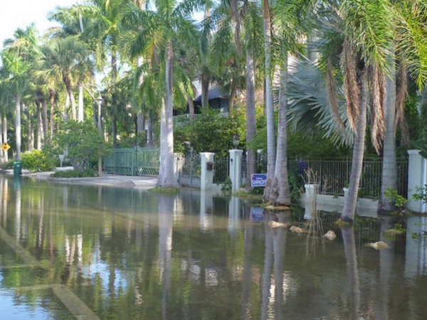 king tide in miami