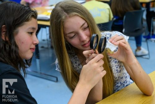 students view butterfly under magnifying lenses