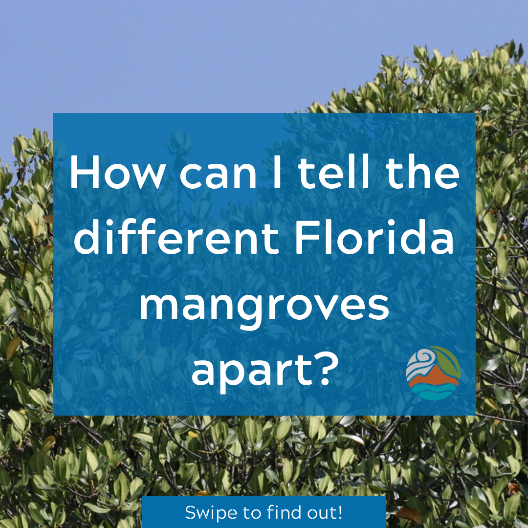 Mangrove Instagram Post
