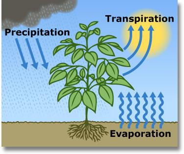 evapotranspiration graphic