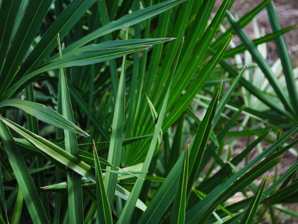 Plant from Split Oak Forest Mitigation Park
