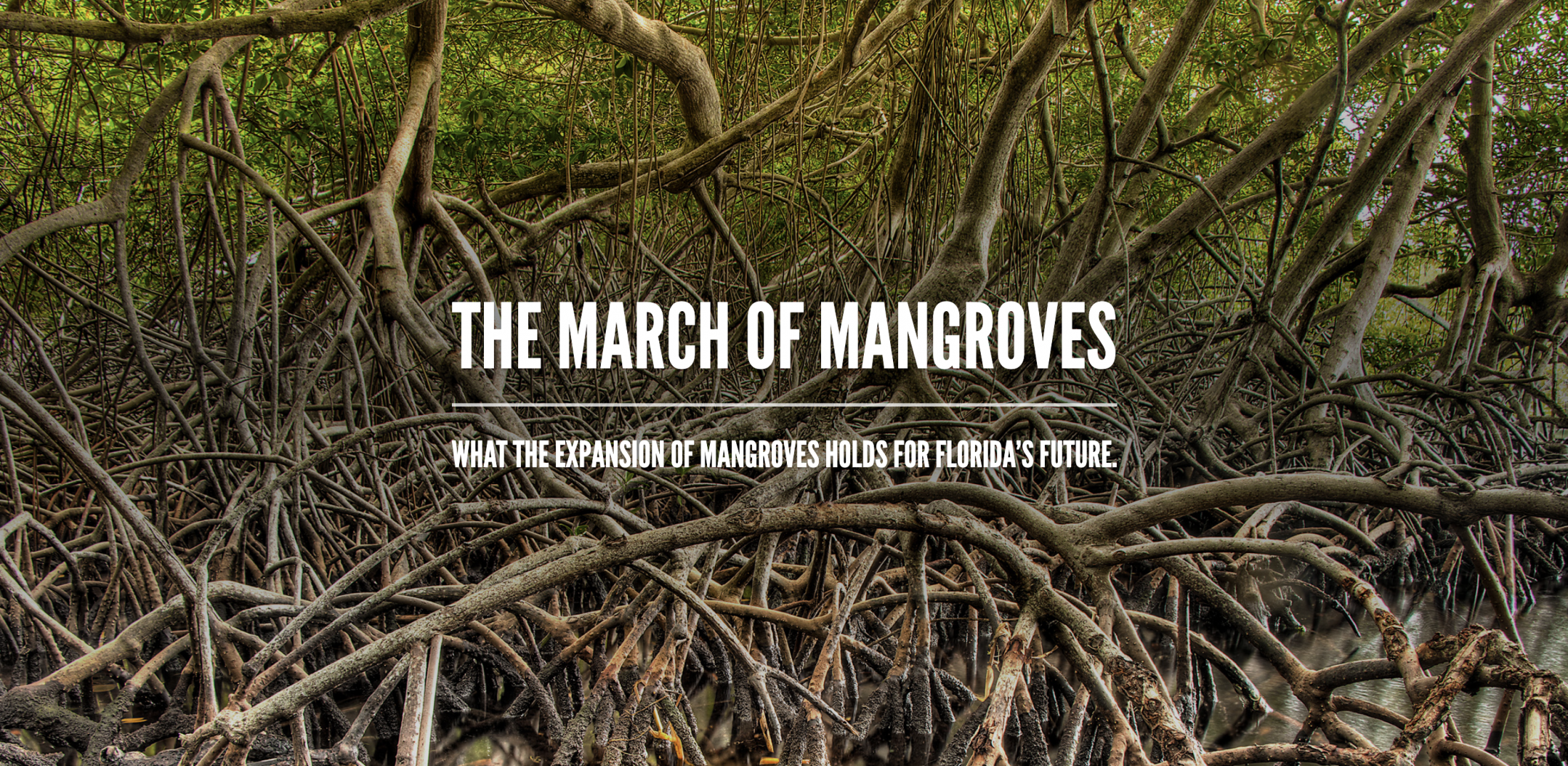 The March of Mangroves