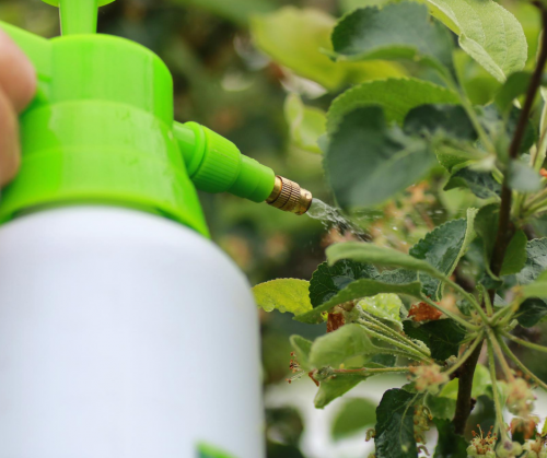 pesticide being applied to a plant