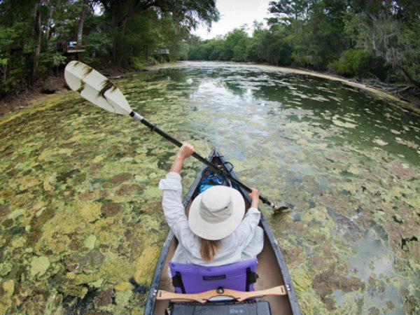 santa fe river kayak algae