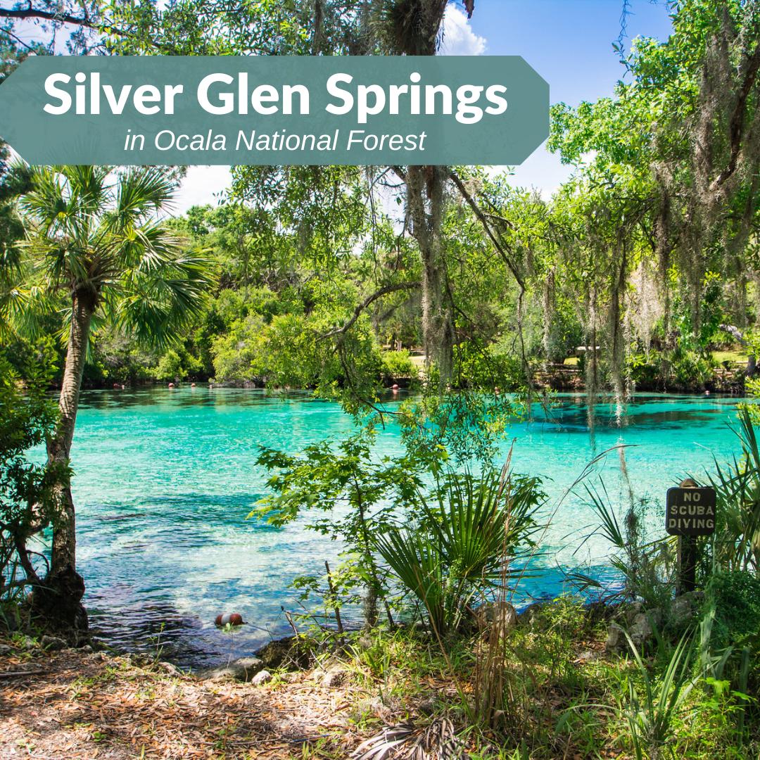 Silver Glen
