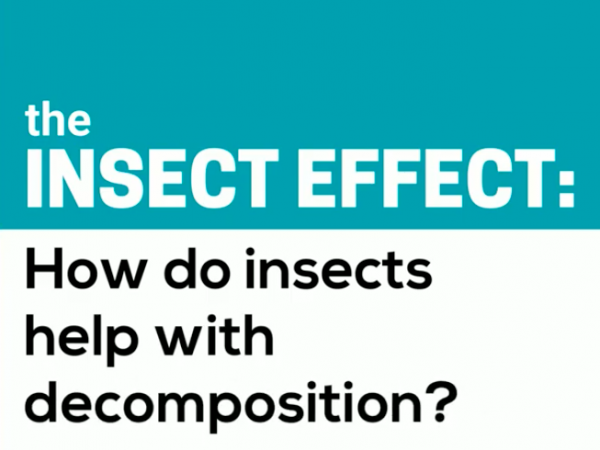 the insect effect: how do insects help with decomposition?
