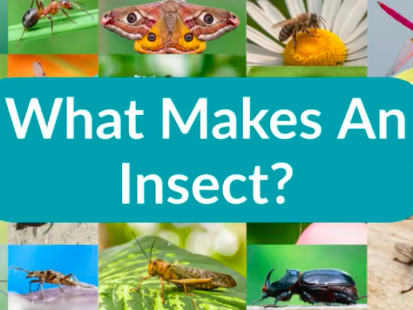 what makes an insect?
