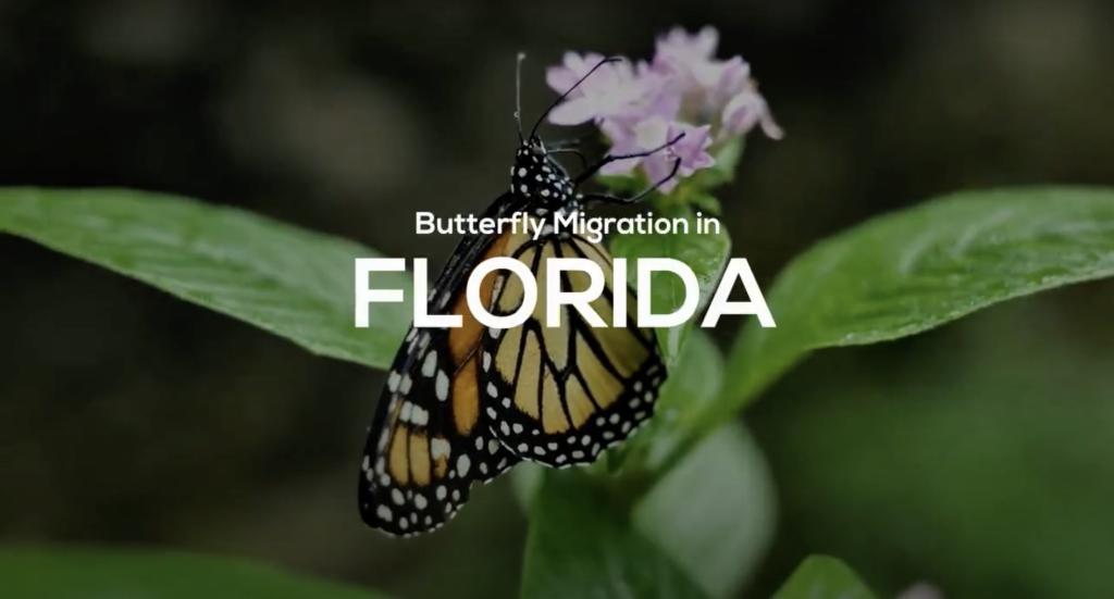 Butterfly Migration in FL