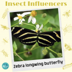 Zebra Longwing - Insect Influencers