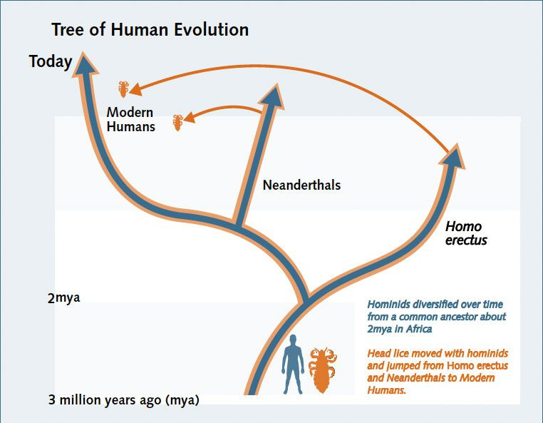 lice and men common evolution map