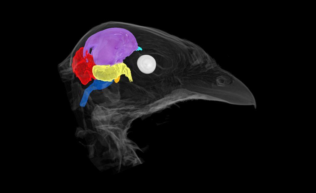 Crotalus viridis lugols head scan