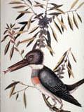 illustration of Bird Fish