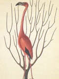 illustration of flamingo