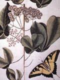 illustration of frutex