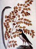 illustration of lark