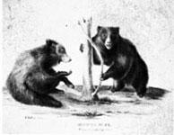 sketch of bears