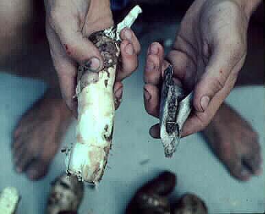 Manioc tuber
