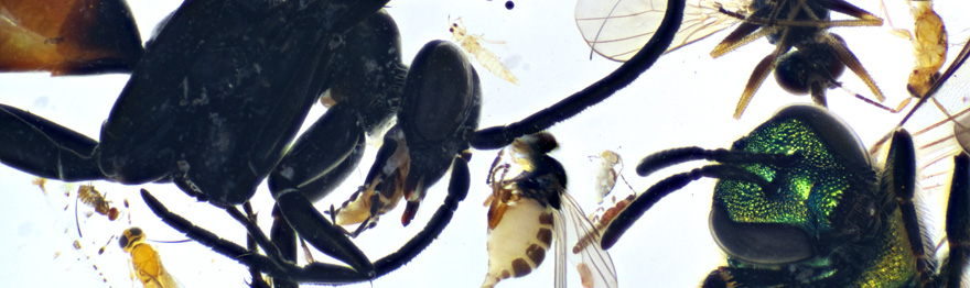 A sample of flower-visiting insects collected from landscaped yards in Gainesville, FL.