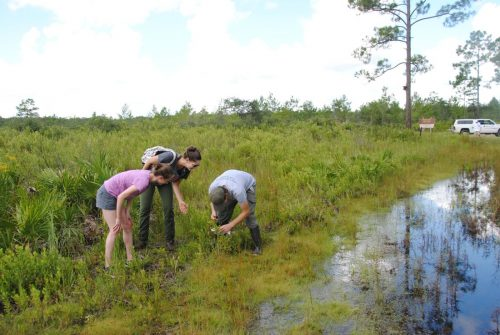 Soltis lab graduate students collecting plants at Etoniah State Forest