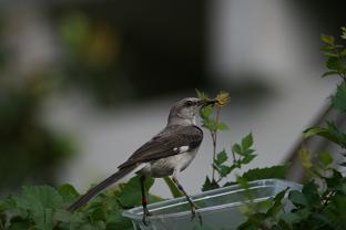 Female eating