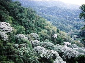 cloud forest in the Santuario de Fauna y Flora