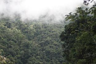 San Pedro cloud forest view, 1500m
