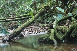 Tono bathing stream