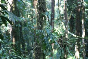 Tono Forest