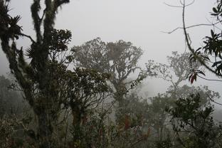 Clouds moving trhu the Wayquecha forest, 2900m