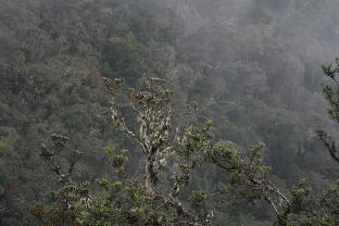 Wayquecha forest view