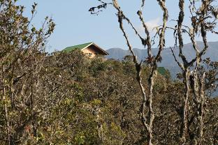 Wayquecha forest, with cabin in the background.