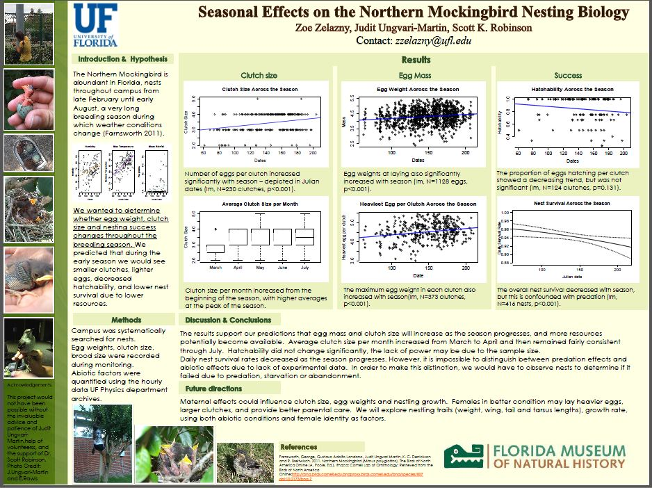 Seasonal Effects on the Northern Mockingbird Nesting Biology