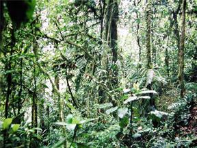 Mature Cloud forest