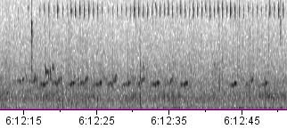 spectogram of the call of the Russet-crowned Warbler